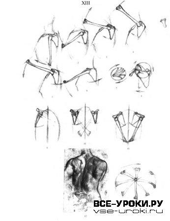 Странности Нашего Тела Занимательная Анатомия скачать