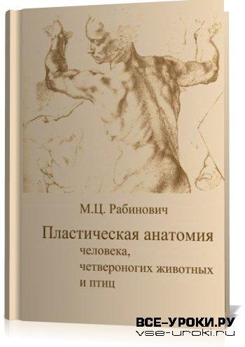 Рабинович Анатомия Для Художников Скачать